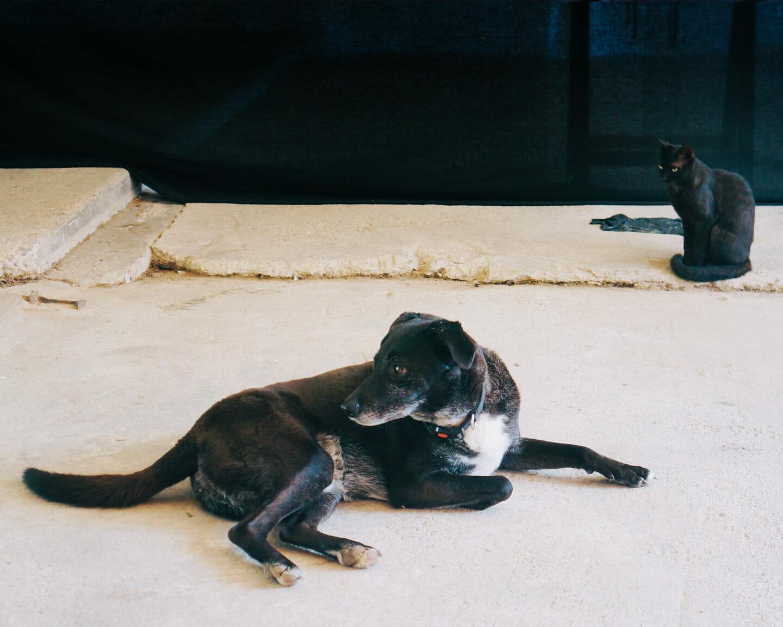 Lawren Spera & Steve Ingham, Unsuspecting dog. Suspicious cat.